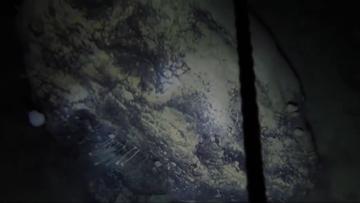 Pod lodami Antarktydy naukowcy odkryli przez przypadek nieznane zwierzęta