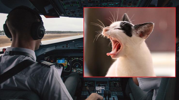 Kot zaatakował pilota. Samolot musiał zawrócić