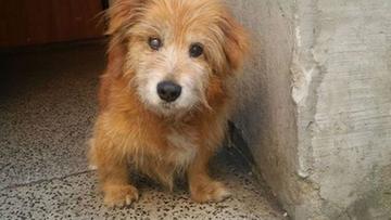 Miesiącami katował psa. Trafił do aresztu. Teraz grozi mu nawet 100 tys. zł kary