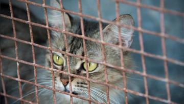200 martwych kotów w domu. Makabryczne odkrycie w Niemczech